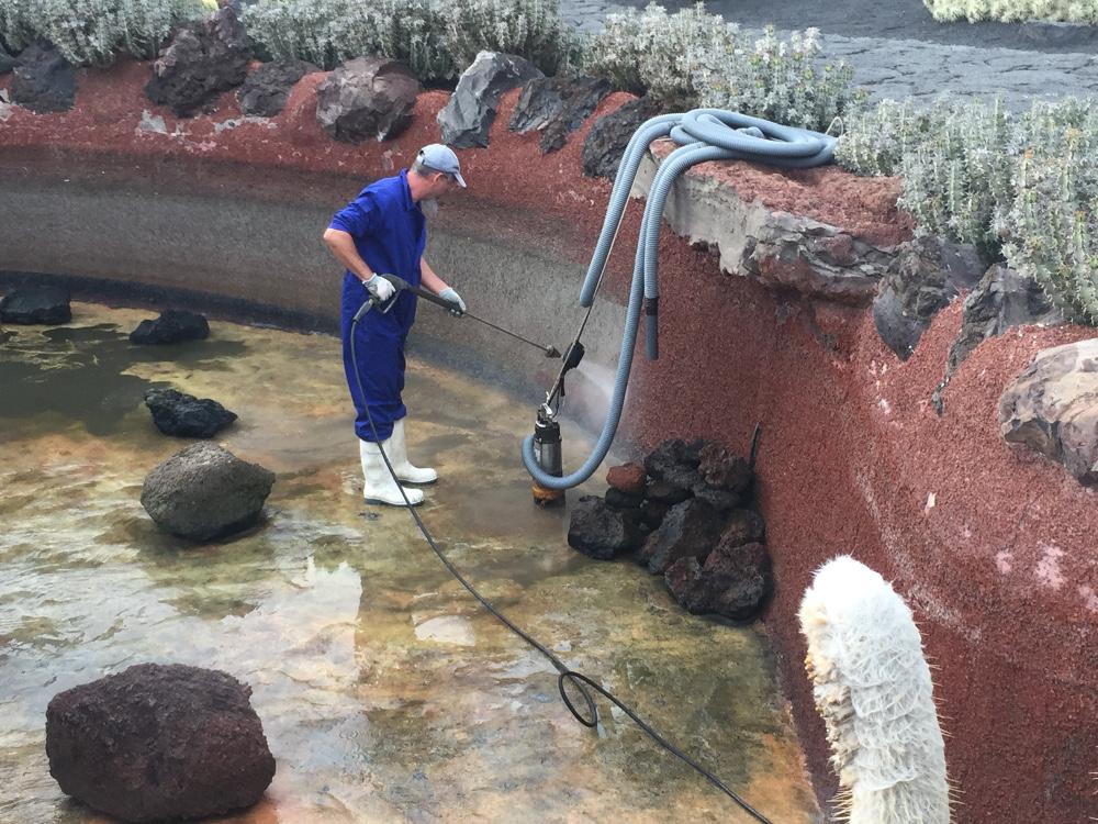 El estanque de las carpas y guppys del jard n de cactus for Estanque de carpas