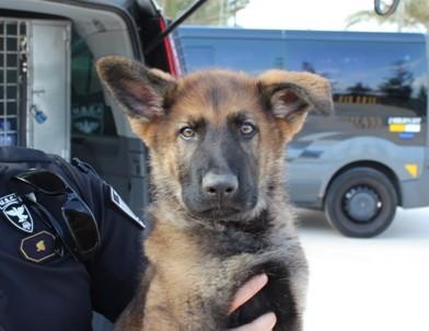 Ator, nuevo perro policía