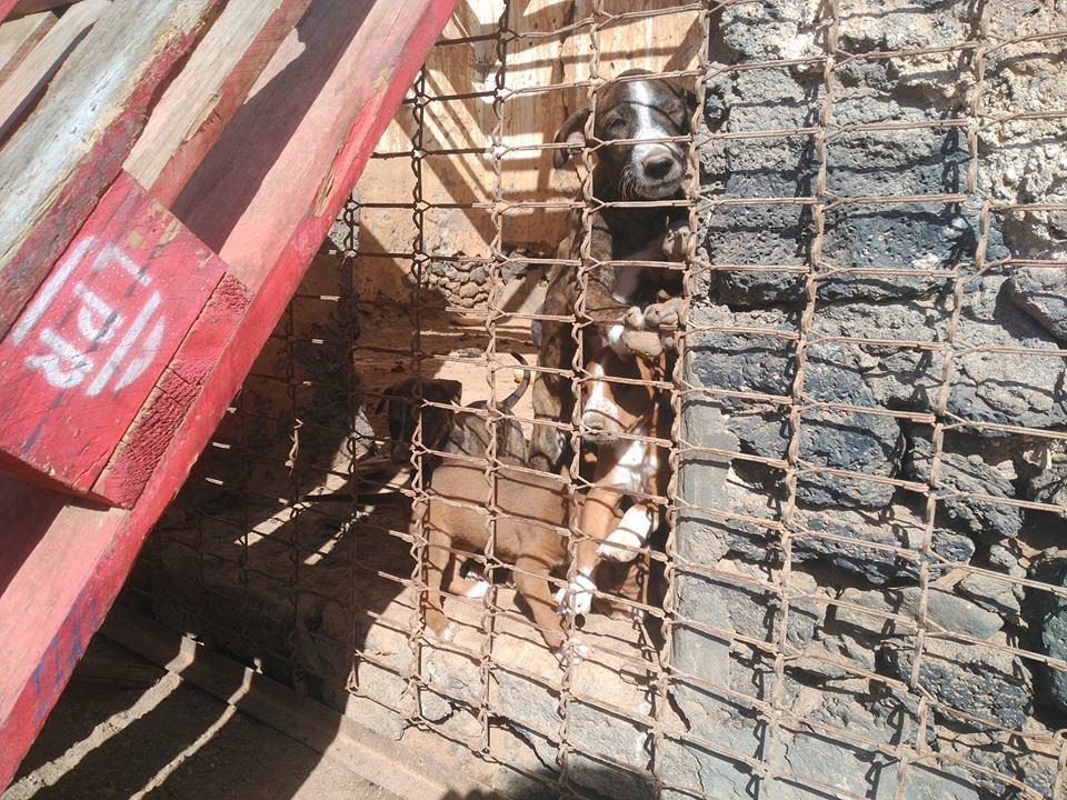 perros encerrados