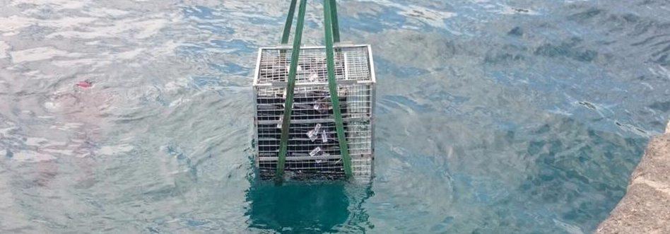 Imagen de las botellas sumergidas el pasado lunes.